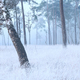 birch tree on frosted meadow in fog - PhotoDune Item for Sale