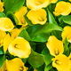 Bouquet of yellow Calla lilies. Zantedeschia - PhotoDune Item for Sale
