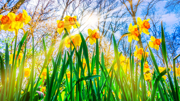 Spring Background. Spring Flowers. Beauty natural background - Stock Photo - Images