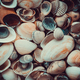 Mixed colorful sea shells as background - PhotoDune Item for Sale
