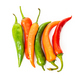 hot chilli peppers isolated on white background - PhotoDune Item for Sale
