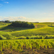 Chianti vineyards and panorama at sunset. Vinci, Tuscany, Italy - PhotoDune Item for Sale
