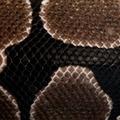 Close-up of Python regius snake scales