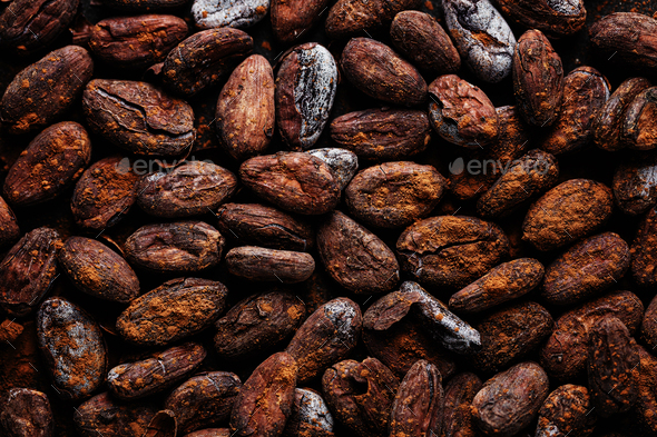 Cacao beans on plate closeup - Stock Photo - Images