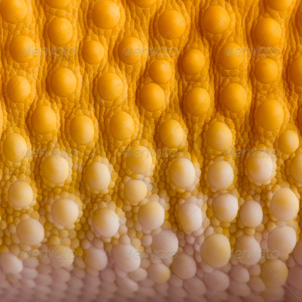 Close-up of Sunglow Leopard gecko scales, Eublepharis macularius - Stock Photo - Images