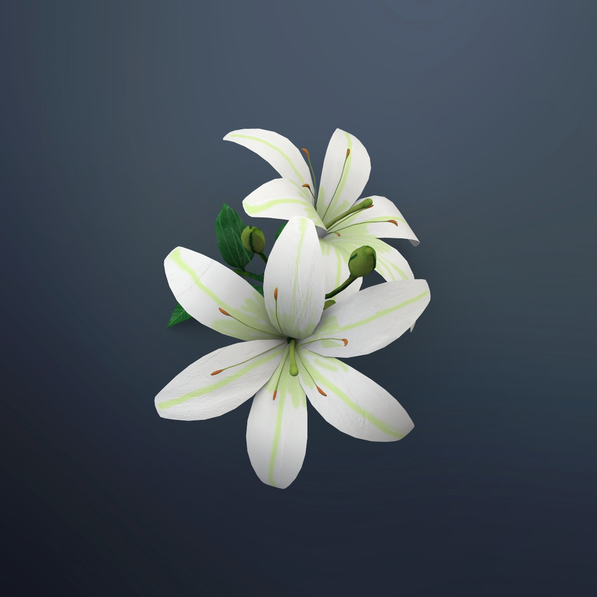 Lily Flower By Deepocean3d 3docean