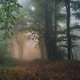 Mysterious Transylvanian forest with fog - PhotoDune Item for Sale