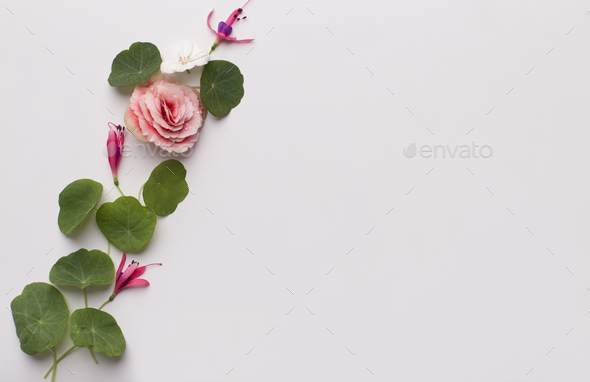 Frame of seedlings and small rose isolated on white - Stock Photo - Images
