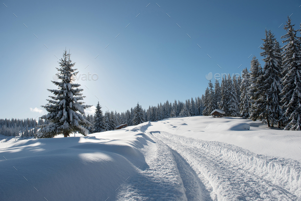 Alpine Landscape with Snow Covered Fir Trees at Winter - Stock Photo - Images