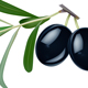 black olives with leaves on white background - GraphicRiver Item for Sale