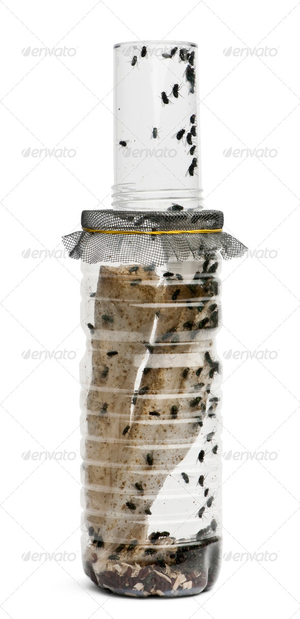 Fly breeding bottle in front of white background - Stock Photo - Images
