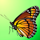 Vector butterfly - GraphicRiver Item for Sale