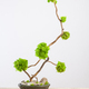 Marimo moss ball tree bonsai tree - PhotoDune Item for Sale