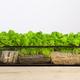 Mossarium - small decoration plants in a glass terrarium - PhotoDune Item for Sale