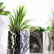 Marbled geometric succulent planters with beautiful tiny plants - PhotoDune Item for Sale