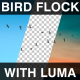 Bird Flock - VideoHive Item for Sale
