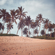 Retro toned picture of coconut palm trees by a beach. - PhotoDune Item for Sale