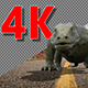 Lizard And Bat Pack Of 5 - VideoHive Item for Sale