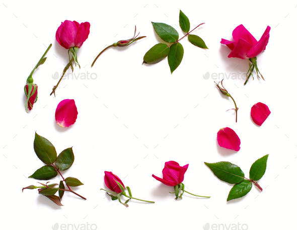Flowers and leaves on a white background - Stock Photo - Images