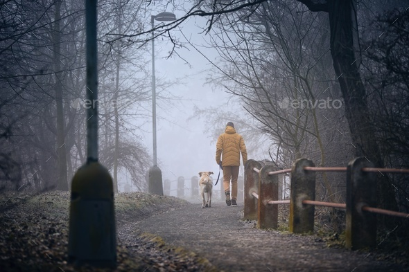 Morning walk with dog in fog - Stock Photo - Images