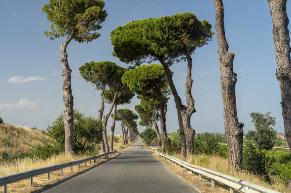 Road with pines at Rocca Imperiale Marina, Calabria - Stock Photo - Images