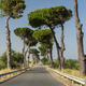 Road with pines at Rocca Imperiale Marina, Calabria - PhotoDune Item for Sale