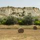 Rural landscape near Policoro, Basilicata - PhotoDune Item for Sale