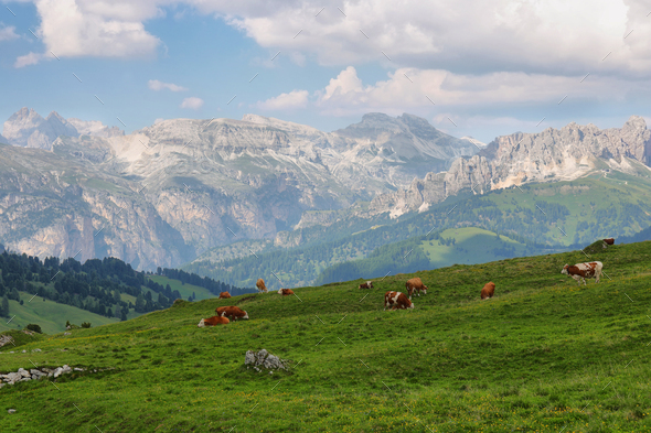 View of mountains and grazing cows in Sella pass, Dolomites Alps, Italy, Europe - Stock Photo - Images