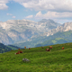 View of mountains and grazing cows in Sella pass, Dolomites Alps, Italy, Europe - PhotoDune Item for Sale