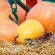 Harvesting decorations made of pumpkin, vegetables and hay - PhotoDune Item for Sale