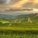 Langhe panorama, Barbaresco vineyards view at sunset, Piedmont, Italy Europe. - PhotoDune Item for Sale