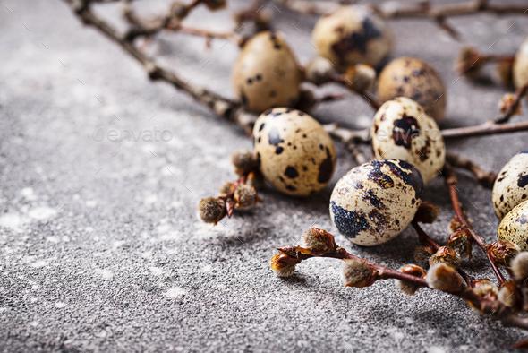 Quail eggs on grey background - Stock Photo - Images