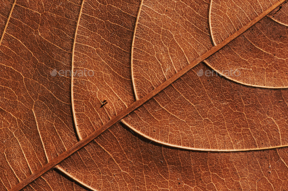 Close-up view of the dry leaf - Stock Photo - Images