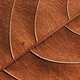Close-up view of the dry leaf - PhotoDune Item for Sale