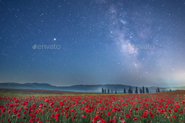 Poppy field at night. - Stock Photo - Images