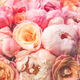 Fresh bunch of pink peonies and roses - PhotoDune Item for Sale