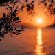 Silhouette olive tree branch in morning warm sunrise light. Sun shape above Mediterranean sea. Sun - PhotoDune Item for Sale