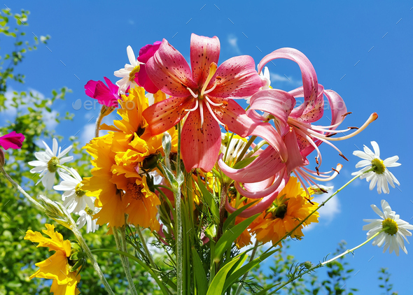 Beautiful bright bouquet of colorful flowers - Stock Photo - Images