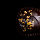 One Single Handmade Chocolate Praline Close Up View. Dark Background with Copy Space - PhotoDune Item for Sale