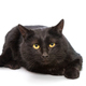 Black cat lying on a white background - PhotoDune Item for Sale