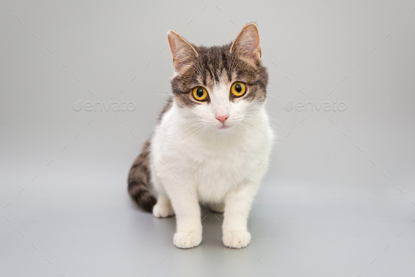 Funny cat on a gray background - Stock Photo - Images