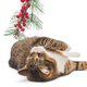 Grey cat and spruce branch - PhotoDune Item for Sale