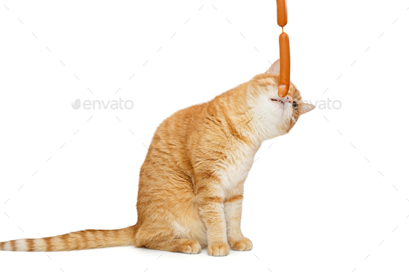 Red cat wants to catch sausages - Stock Photo - Images