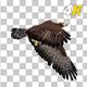 Golden Eagle - 4K Flying Transition - VideoHive Item for Sale