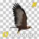 Golden Eagle - 4K Flying Loop - Side View - VideoHive Item for Sale