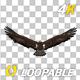 Golden Eagle - 4K Flying Loop - Back View - VideoHive Item for Sale