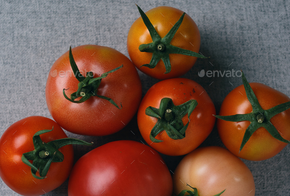 Ripe tomato from an organic farm in early autumn - Stock Photo - Images