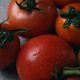Ripe tomato from an organic farm in early autumn - PhotoDune Item for Sale