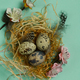 Easter with Quail Eggs - PhotoDune Item for Sale