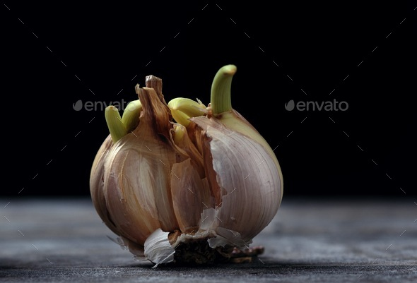 Close-up view of sprout garlic - Stock Photo - Images